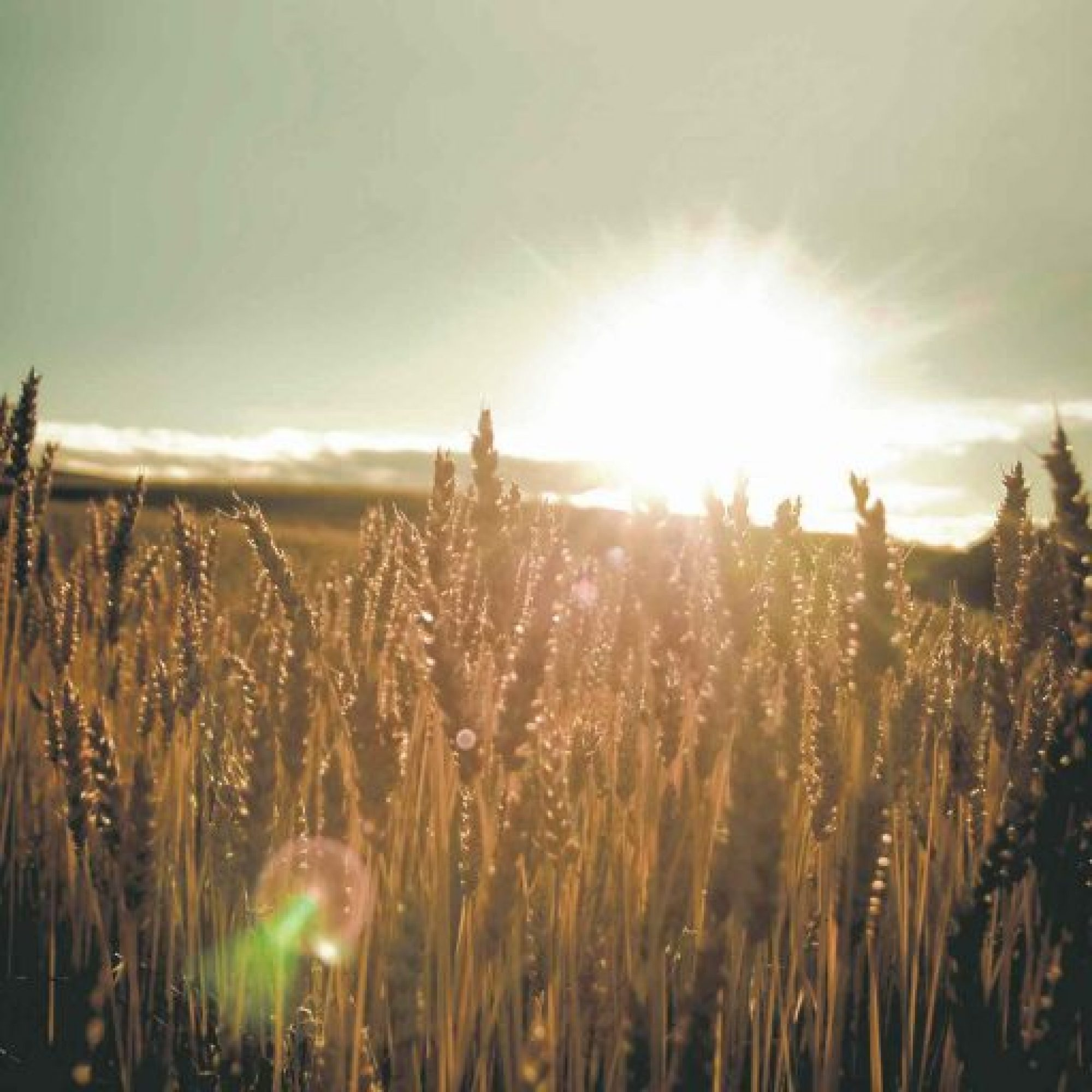 Blog – The Grain Fields